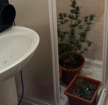 115e3143da19446dec909a6e778a1b5e - Serra marijuana nella doccia di casa