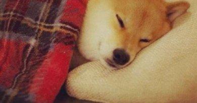 maru taro il cane piu famoso su instagram 8 - Il cane più famoso su instagram