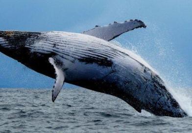 Mamma ho visto una Balena!