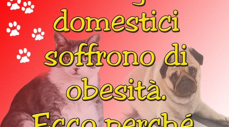 Cani e gatti domestici soffrono di obesità. Ecco perché.