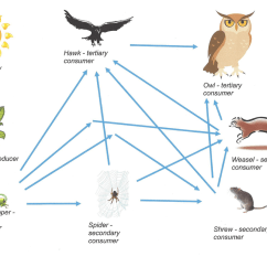 Wolf Food Chain Diagram Carrier Air Conditioner Wiring Ecology Welcome To Mr Fleming Science