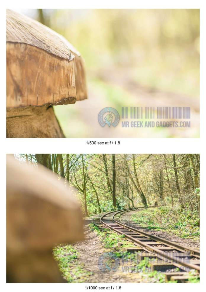 What is Depth of Field - Tree-Stump-DOF