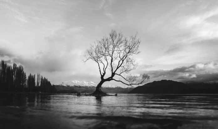 Where is New Zealand - The Lonely Tree