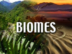 ESS Topic 2 4 Biomes Zonation And Succession AMAZING