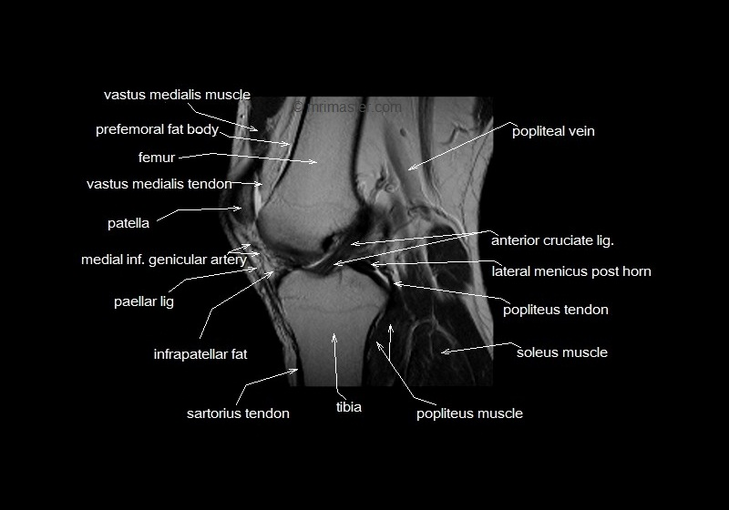 Elbow Anatomy Hip Joint