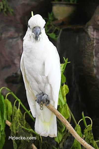 Langkawi Bird Paradise and Wildlife Park