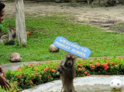 Krabi Snake Farm & Krabi Monkey School