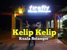 Kelip Kelip Kampung Kuantan Di Kuala Selangor 01