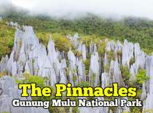 the-pinnacles-gunung-mulu-national-park-01-copy