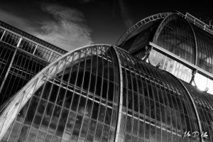 Black and white image of the Palm House at the Royal Botanic Gardens Kew