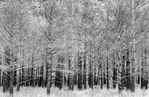 Black and White photograph of trees in Torridon Scotland by Mr P Kalu