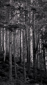 Black and white image of the Torridon Forest by MrPKalu