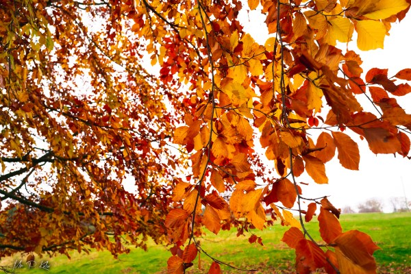 Image for Autumnal colours by Mr P Kalu header