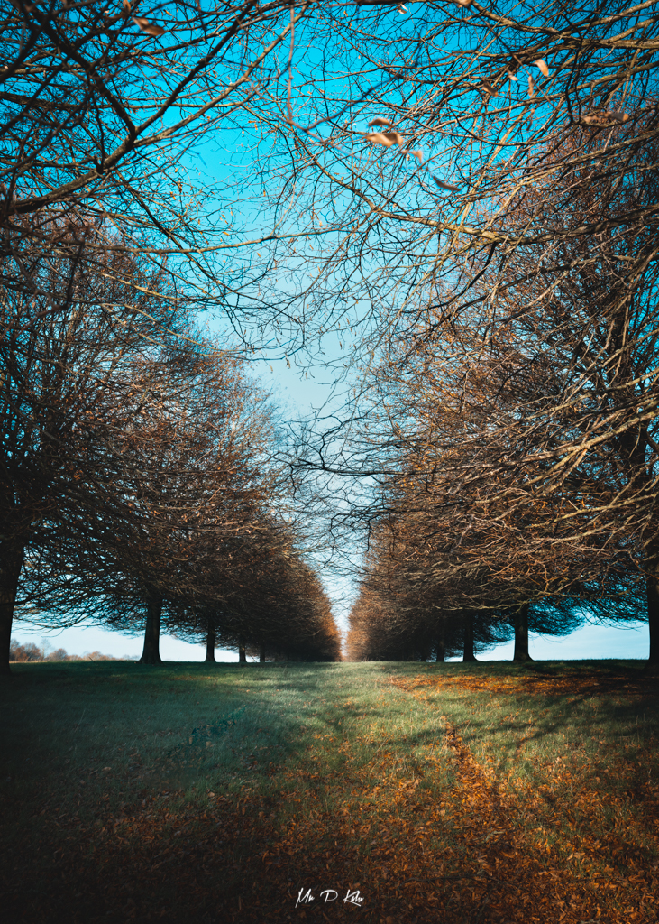 Image of tree lined fields in the grounds of Blenheim Palace