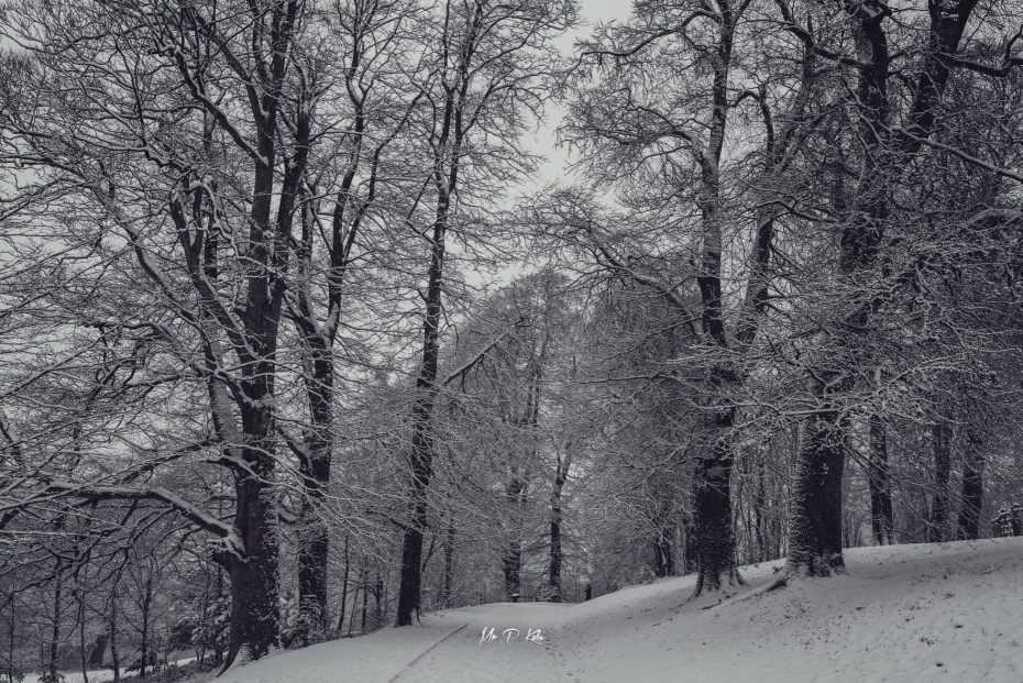 Snow covered paths in the grounds of Blenheim Palace in Woodstock