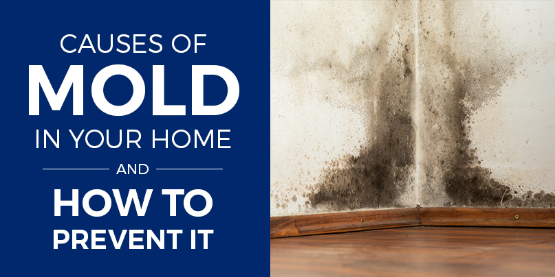 Causes Of Mold In Your Home How To Spot Amp Prevent Mold