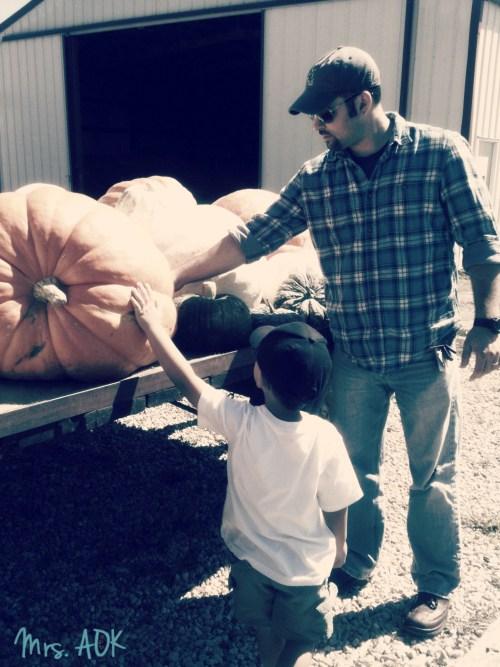 Pumpkin Picking Mrs. AOK, A Work In Progress