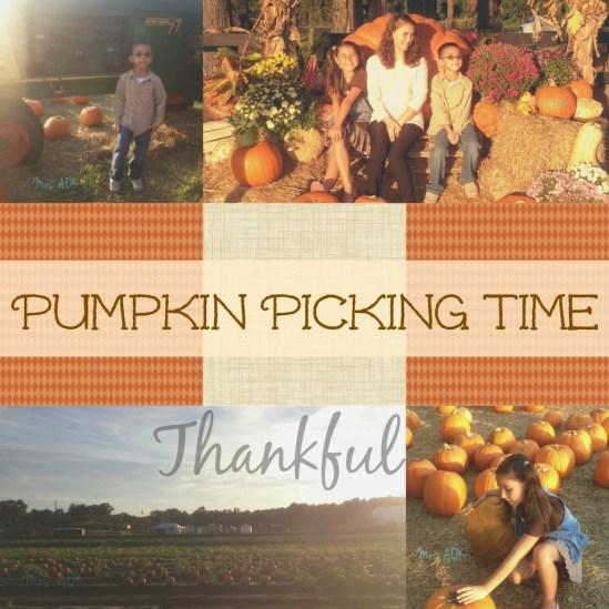 Thank You, Pumpkin Patch…
