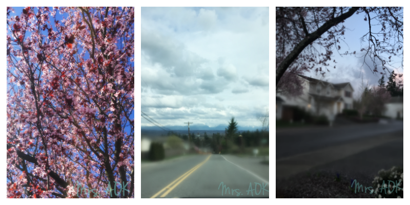 PNW Trees Mountains | Thank You Notes
