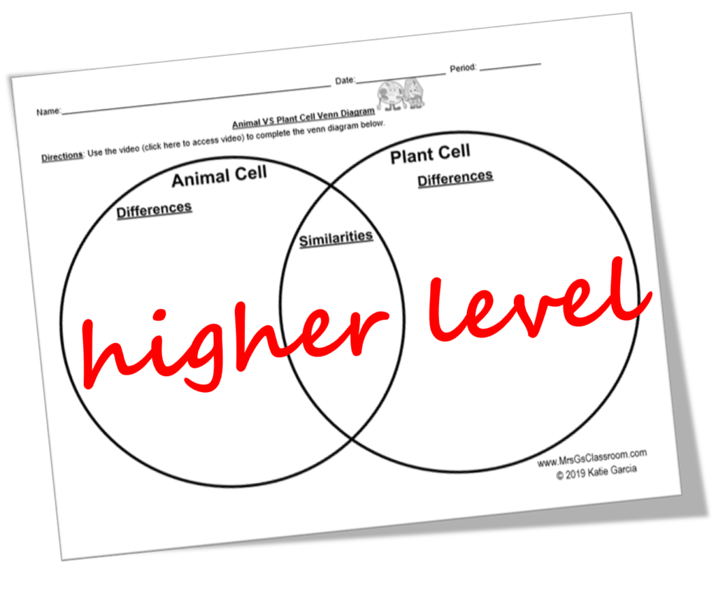 plant cell vs animal cell venn diagram