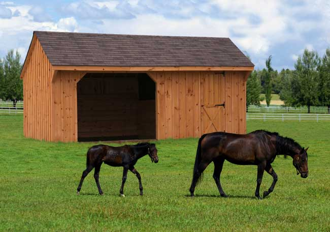 Mr Shed  Horse RunIns