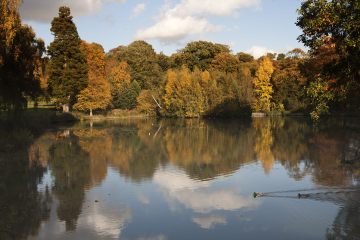 Photograph of Hampstead Heath in Autumn 2  London Photos