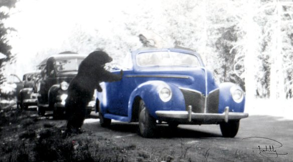 Bear-Meets-Woman-in-Converible-1940s