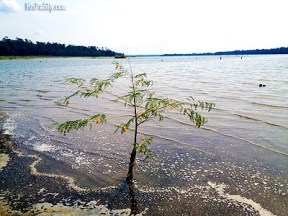 Image of Johnson Island only tree in water