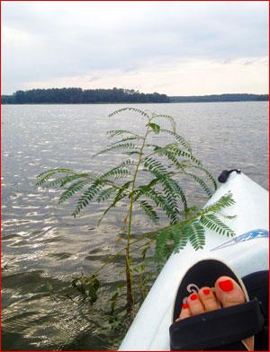 Kayaking: Discovering Padilly Island