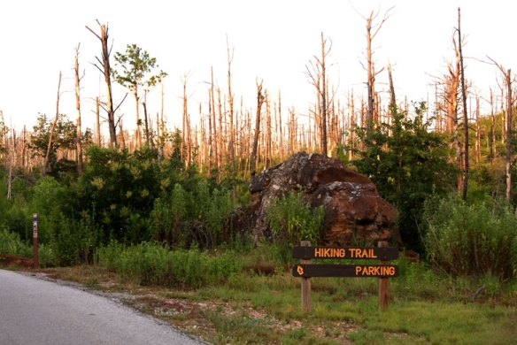 Entrance sign to Purple Trail Bastrop State Park
