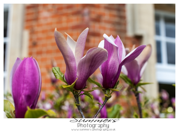 purple flowers, Buckinghamshire Engagement Shoot, Danesfield House Hotel,  Summers Photography
