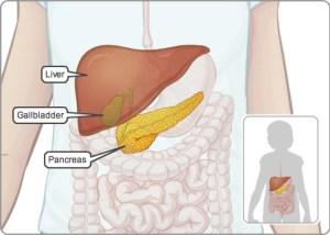 IMD_digestive_system_accessory_organs_EN_72