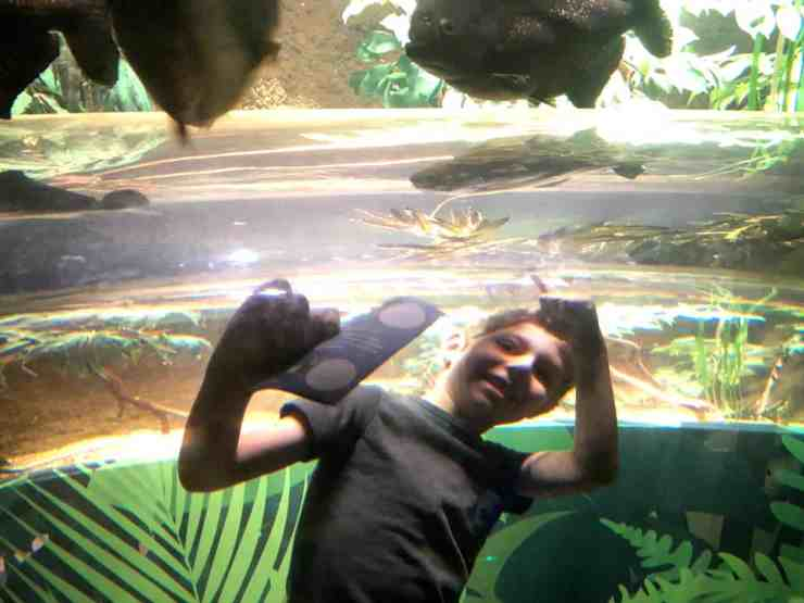 Sea Life Birmingham Piranhas