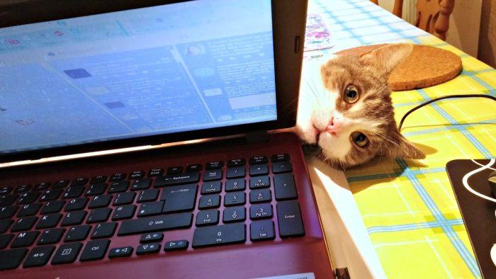 Mr Tinks peers round laptop