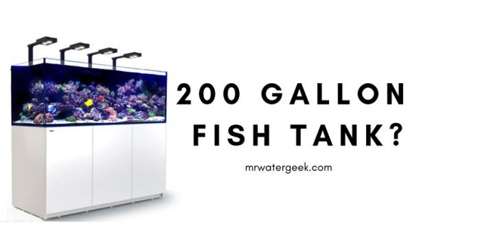 200 Gallon Fish Tank Review