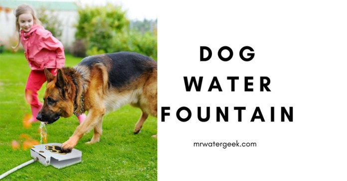 This Dog Water Fountain Solves DANGEROUS Pet Dehydration