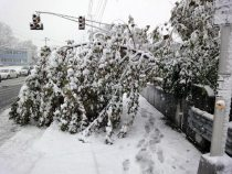 Snow in Westwood (10/29/11).
