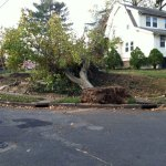 Hurricane Sandy aftermath along Palm Street, Westwood, NJ (11/5/2012).