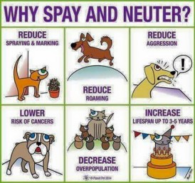 Why Spay-Neuter