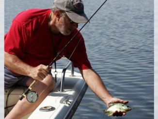 This small but feisty redear bream inhaled the author's mayfly bait.