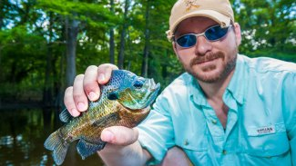 Top 8 tips for more bream