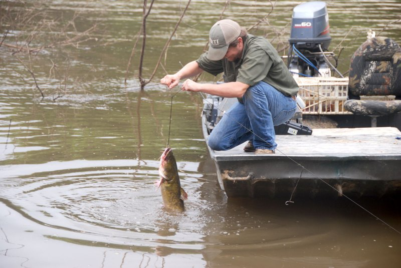 Trot lining is a fun and productive way to fish for river catfish during the summer.