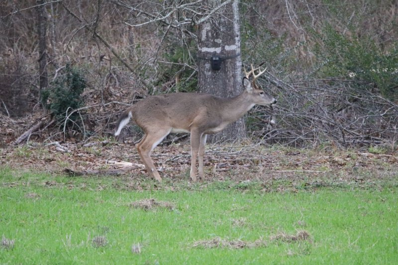 Hiring an expert to evaluate the deer and the land, and to advise on such details as trail camera (see tree in background) usage can save the modern club time and money in the right situation.