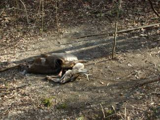 Getting people to responsibly dispose of deer carcasses in CWD zones is going to really difficult to accomplish.