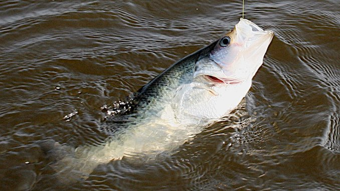 Flooding in the Delta and northern Mississippi might cause fishermen to change tactics and locations for spawning slabs this spring.