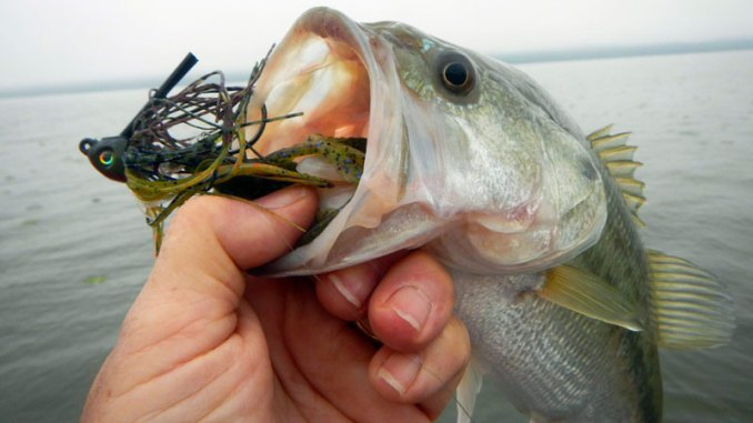 Working this KVD jig along a grass line resulted in a nice Tenn-Tom bass coming to the boat.