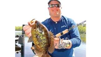 Species spotlight: Warmouth Sunfish