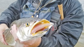 Does the moon affect the trophy trout bite?
