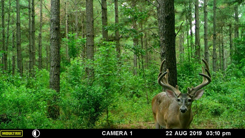 "Chip Henderson of Flowood first saw his ""Mack Daddy"" buck in a trail-camera photo in early August. (Photo courtesy Chip Henderson)"