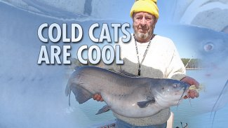 Cold cats are cool in Mississippi winters